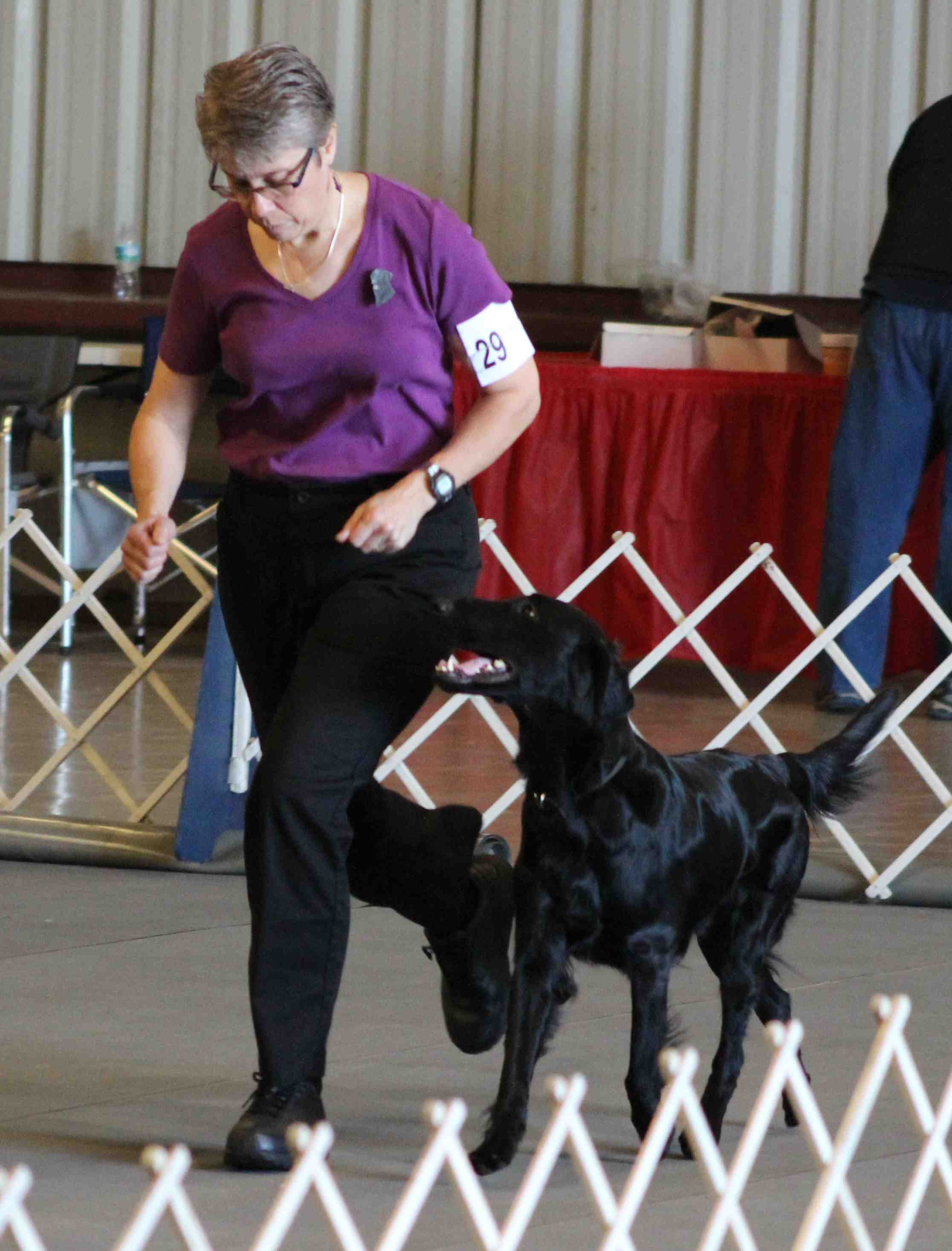 Sonic and Adele doing the Fast in the obedience ring